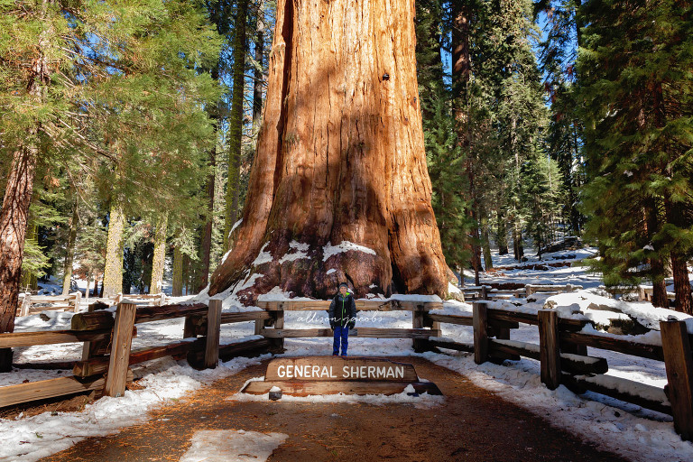 weekend trip to Sequoia National Park in the winter  Allison Jacobs Photography