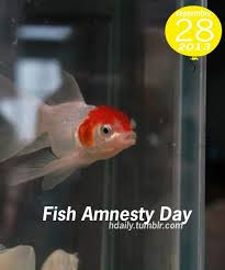 Fish Amnesty Day