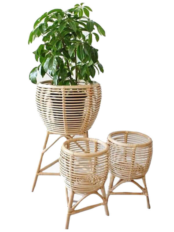 Cane and Bamboo Planter