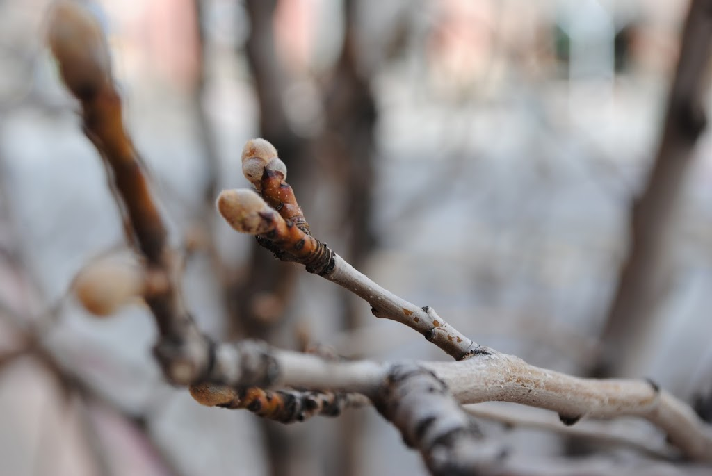 Garden Branches In The Spring
