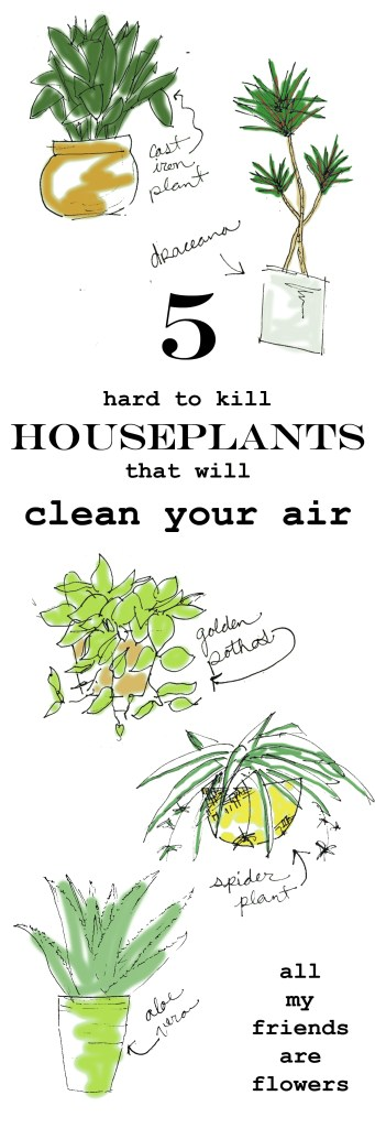 air cleaning houseplants allmyfriendsareflowers