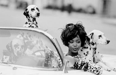 naomi car dogs