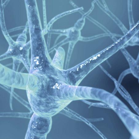 https://i0.wp.com/www.allmystery.de/dateien/rs20559,1246902300,hh_synapsen.jpg