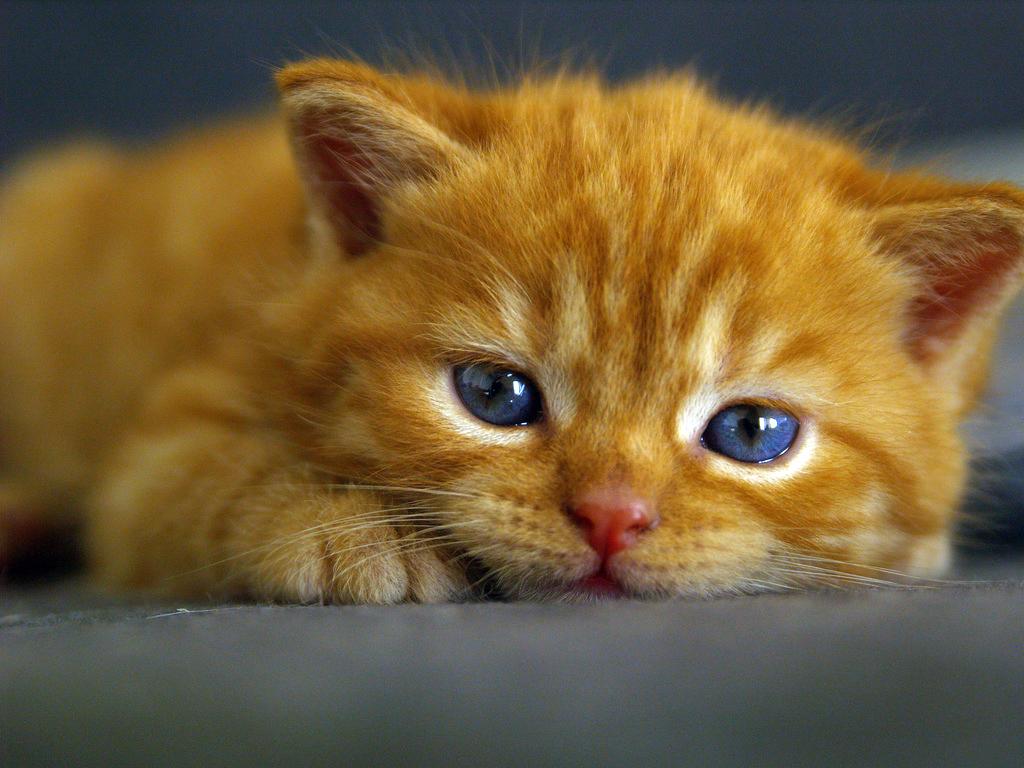 Super Cute Baby Cats Wallpaper S 252 223 E Katzen Allmystery