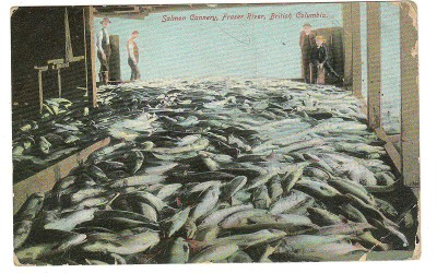 Mount Pleasant, B.C. RF D 1906 2c Salmon Cannery Postcard to U.K.