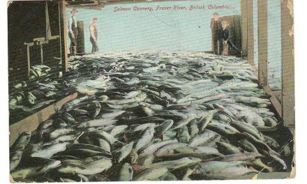 Mount Pleasant, B.C. RF D 1906 2c Salmon Cannery Postcard to U.K.