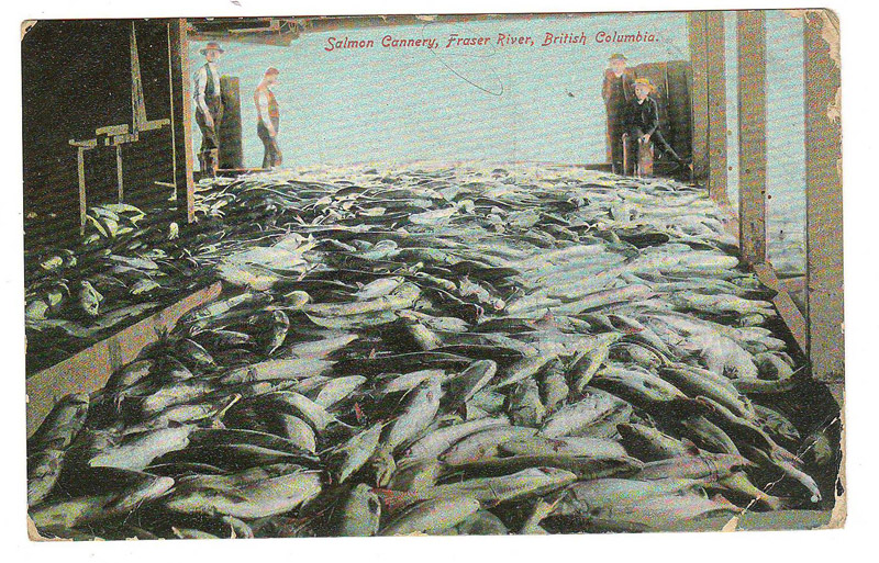 salmon cannery