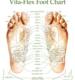 diagram of bottom of foot for reflexology [ 1351 x 1575 Pixel ]