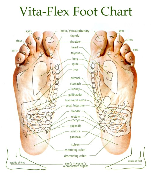 small resolution of diagram of bottom of foot for reflexology