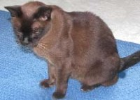 Removing Cat and Dog Urine Contamination In Carpet - All ...