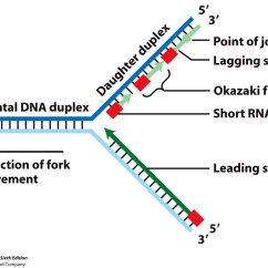 Simple Diagram Of Dna Replication 4 Wire Resistance Measurement Method Detailed Transcription Photosynthesis
