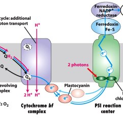 1 light dependent reactions of photosynthesis occur in the thylakoid membranes of chloroplasts  [ 1400 x 676 Pixel ]