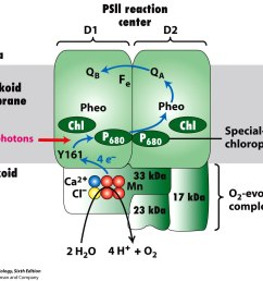 1 light dependent reactions of photosynthesis occur in the thylakoid membranes of chloroplasts  [ 1288 x 1072 Pixel ]