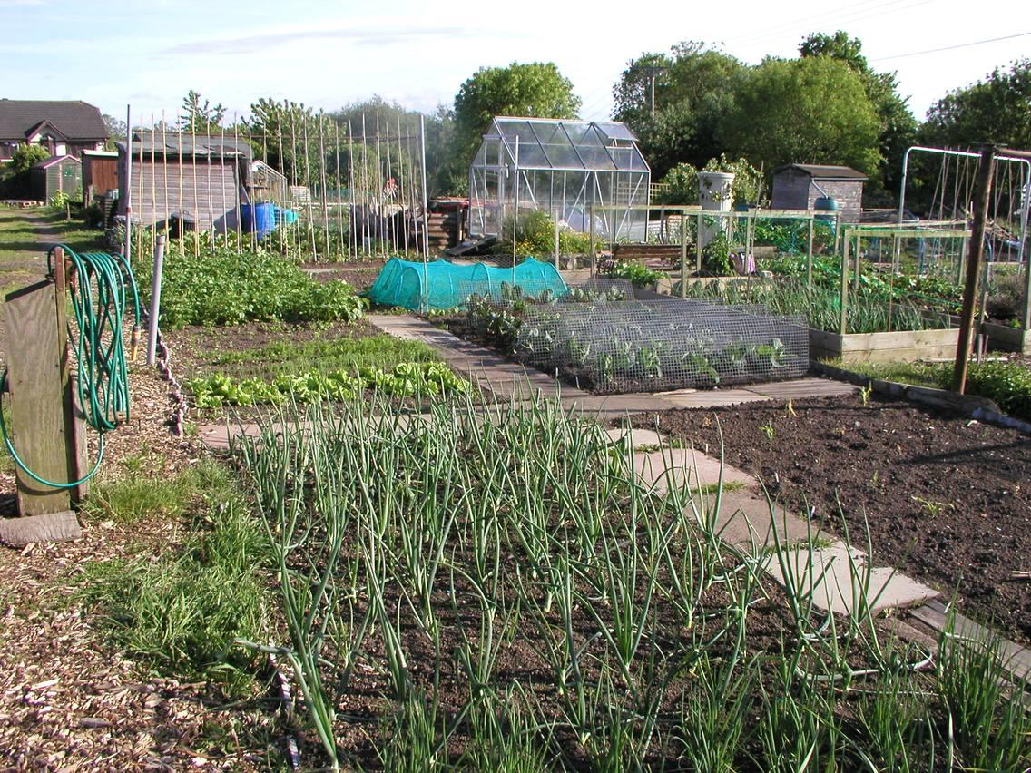 allotment garden vegetable fruit