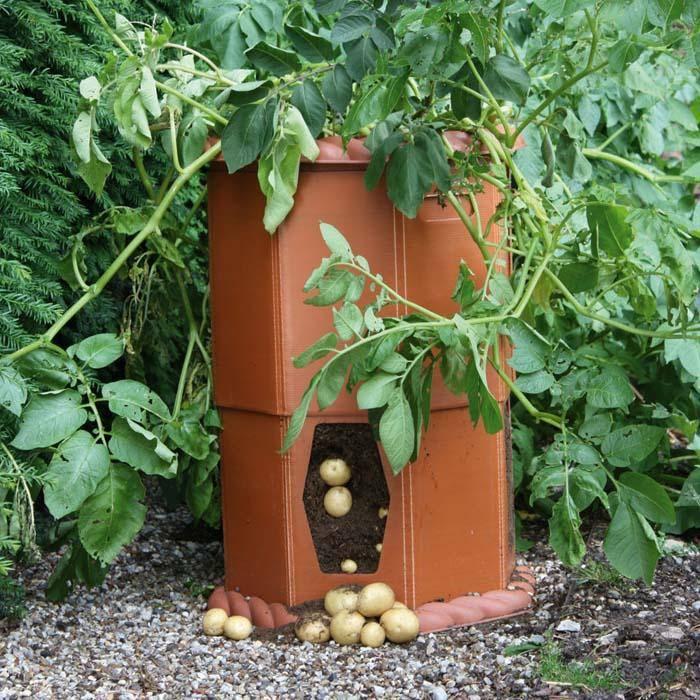 Tub Vegetables Gardening