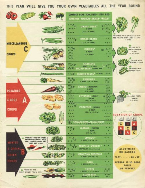 small resolution of crop rotation the three year crop rotation plan