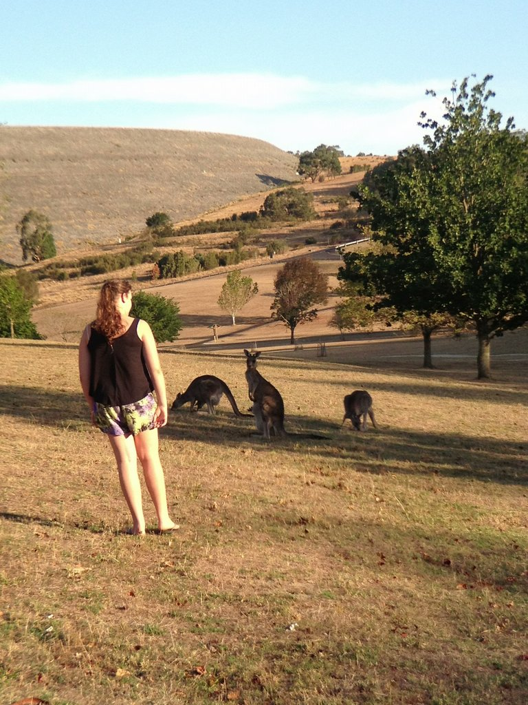 Kangaroos at Cardinia Reservoir