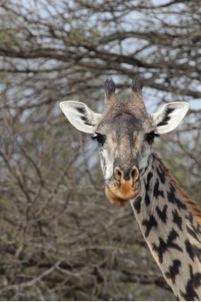 On a family safari in Tanzania, Claire spotted a giraffe.