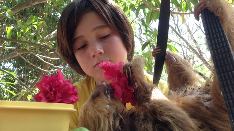 J watches a rescued sloth eat the hibiscus flowers he gathered for it.