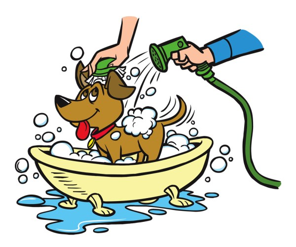wash dog in colorado