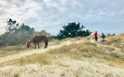 The Wild Ponies of Shackleford Island