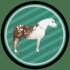 Horse Coat Colors Quiz
