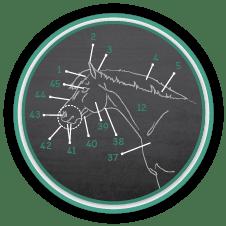 Parts of the Horse Quiz