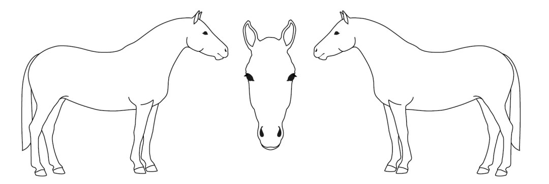 horse identification tutorial kids
