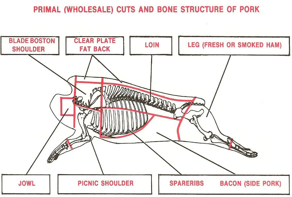 Primal Cuts and Bone Structure of Pork – All Qd Up