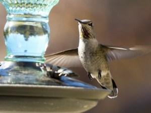hummingbird-14516794437tk