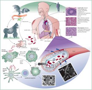 ebola-virus-story