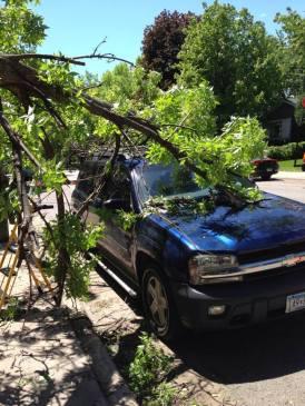 24 Hour Emergency Tree Service