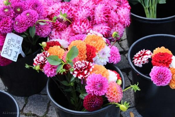 Alltagssterne-Stuttgart-Markttag-Samstag-Blumenstand