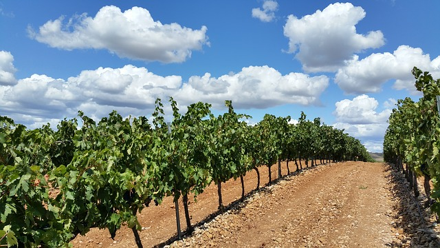 wine vacation destinations spain