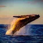5 Best Whale Watching Destinations Around the World