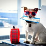 Traveling With Your Pets: The Ultimate Guide to Pet-Friendly Hotels and Travel