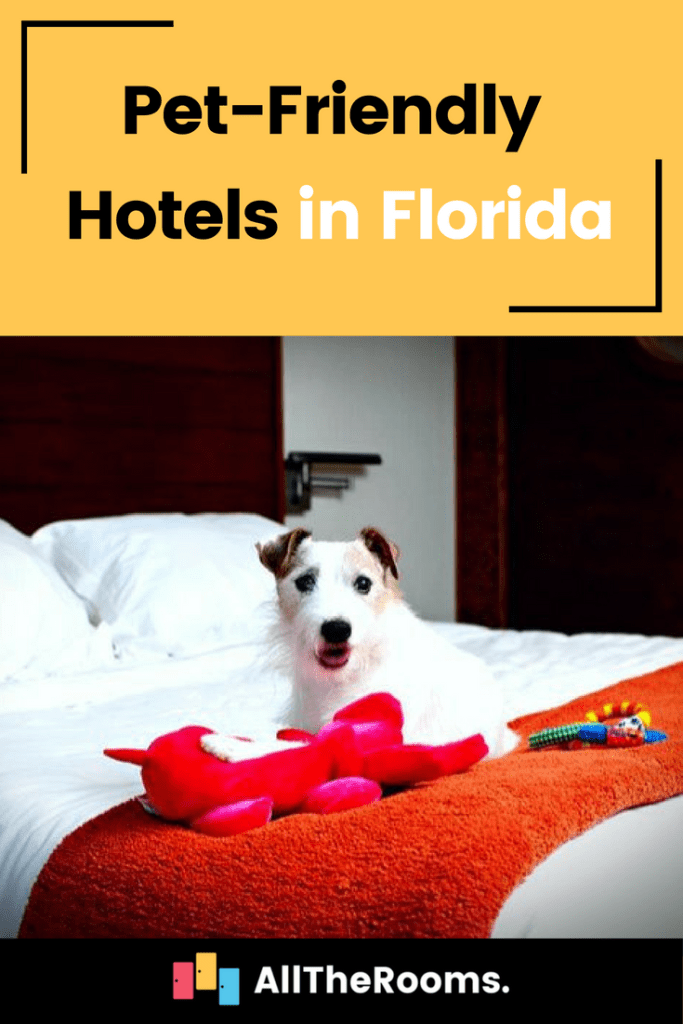 6 Best Pet Friendly Hotels In Florida The Alltherooms Blog
