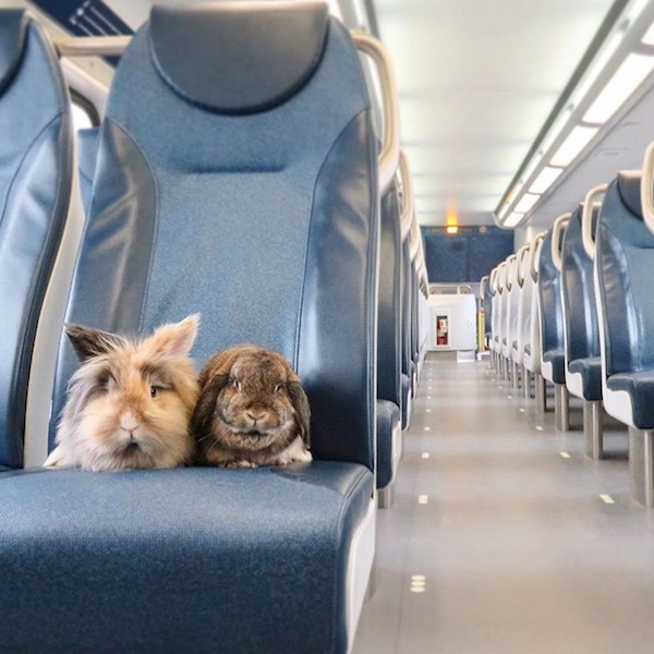 Travelling with Rabbits from Europe to USA