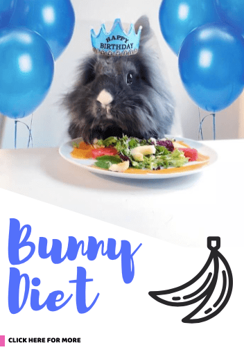 bunny diet what rabbit eat