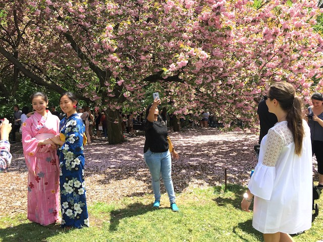 cherry_blossom_nyc_brooklyn
