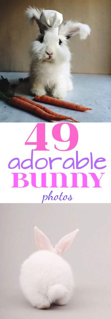 49 adorable bunny photos