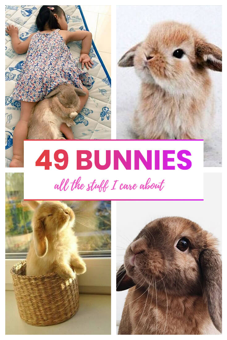 cute bunny rabbit pictures