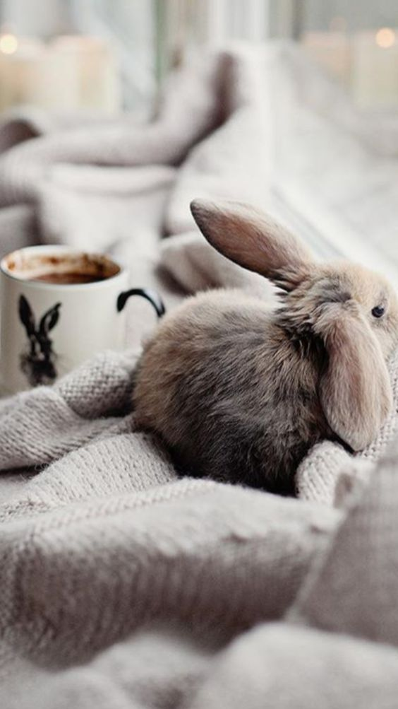 cute bunny picture
