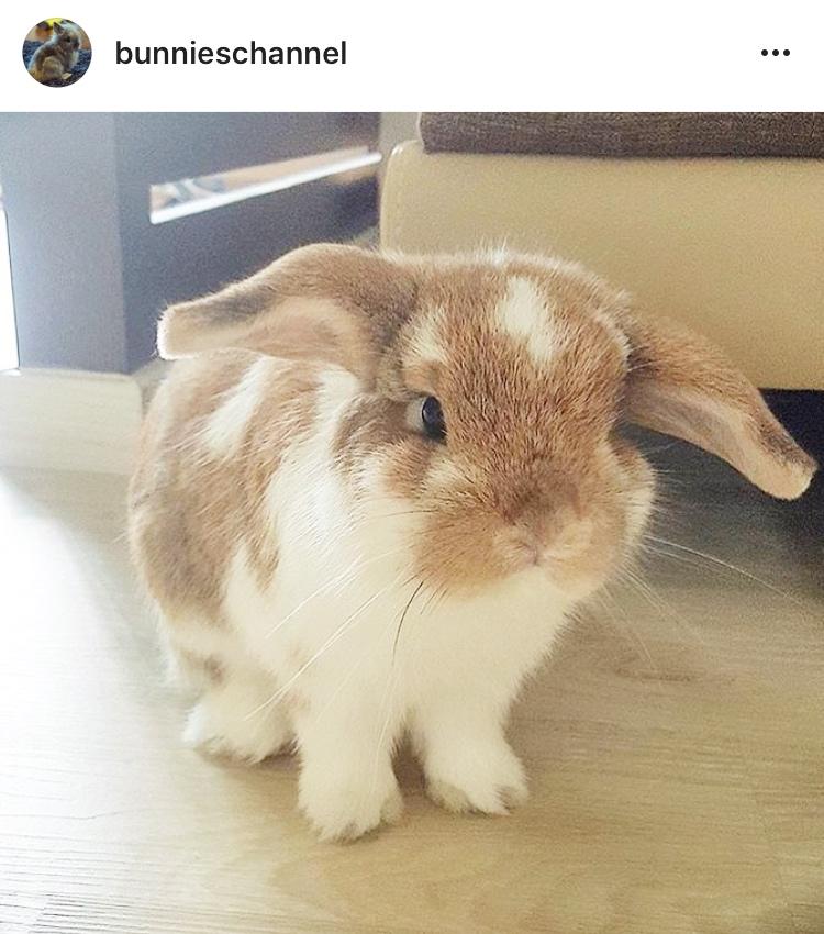 11 bunnieschannel allthestufficarebout