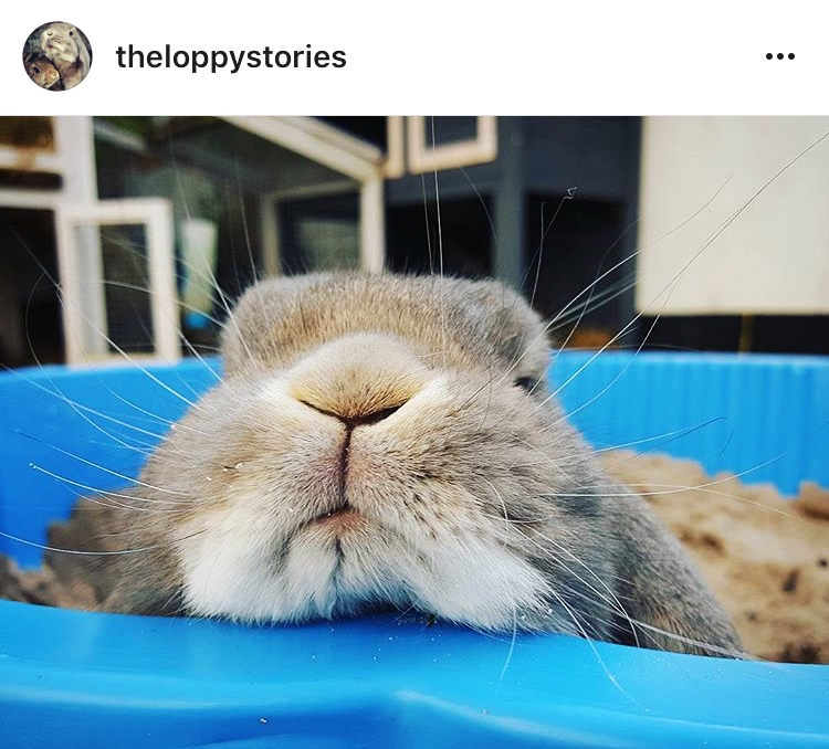 4 the loppy stories allthestufficareabout