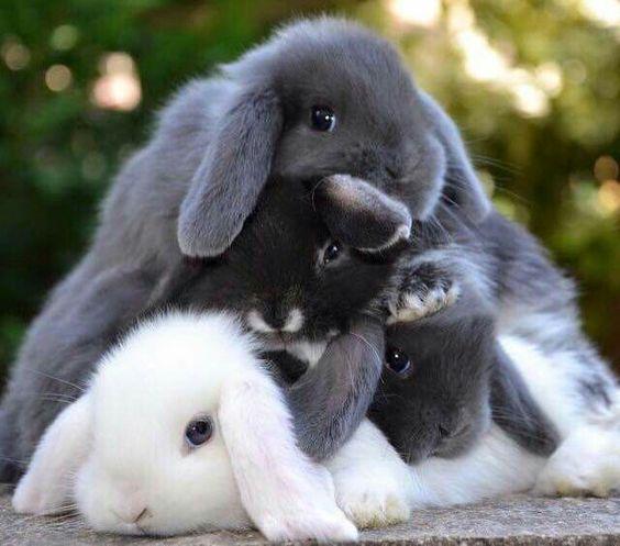 a pile of bunnies
