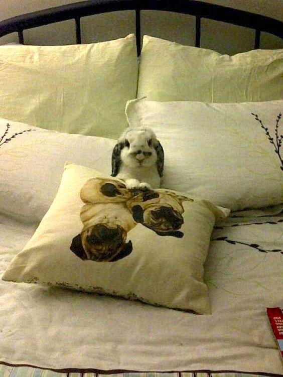 bunny goes to sleep