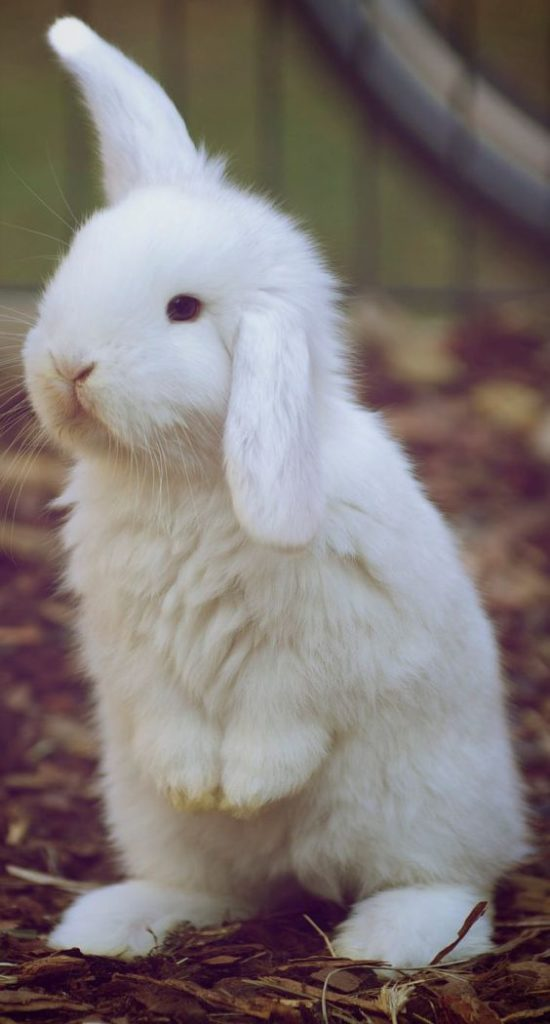bunny rabbit listening standing up