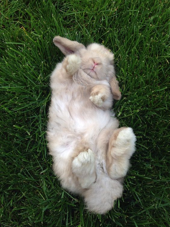 bunny on the grass