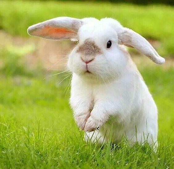 bunny outdoors